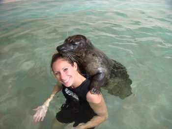 Seal-Swim-at-Miami-Seaquarium