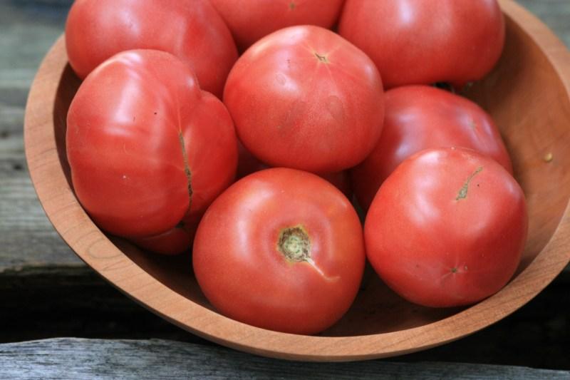 Large Of Arkansas Traveler Tomato