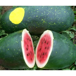 Small Crop Of Moon And Stars Watermelon