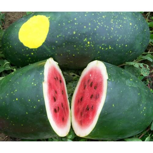 Medium Crop Of Moon And Stars Watermelon