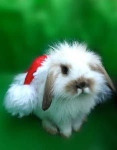 Cute AND Festive! ;)