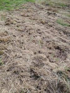 Cut hay is a useful resource