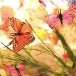 Learning about nature: 5 great places to find butterflies
