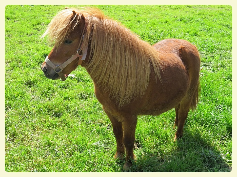 Equine assisted therapy. Featured by Special Learning House. www.speciallearninghouse.com..jpg
