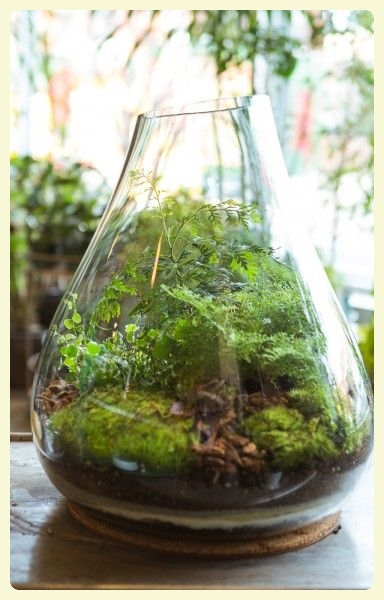 Planting in a clear jar or vase. Featured by Special Learning House. www.speciallearninghouse.com.