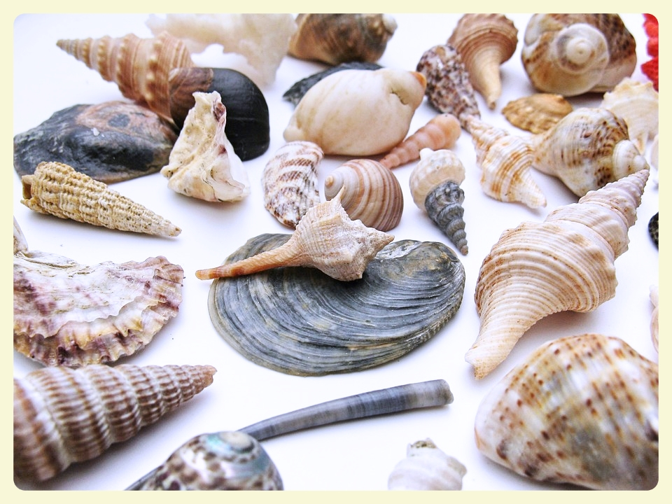 Seashells sensory box. Everyday home program materials. Featured by Special Learning House. www.speciallearninghouse.com
