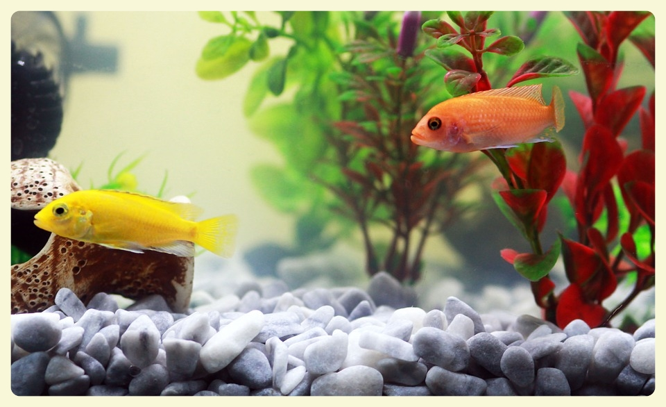 Therapeutic aquariums for autistic children. Special Learning House. www.speciallearninghouse.com.jpg