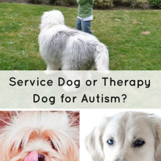 What is the difference between a service dog and a therapy dog?