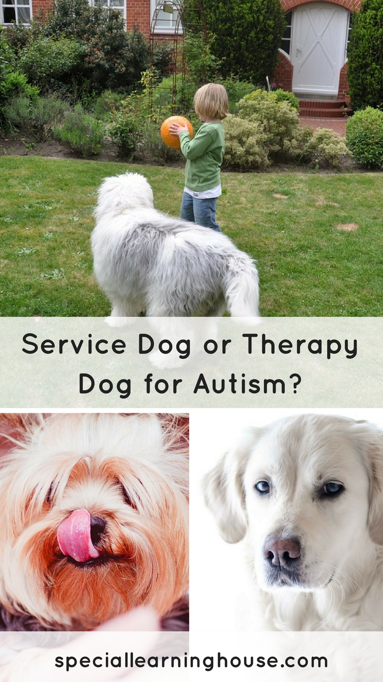 Should you choose a service dog, therapy dog or companion dog for your child with autism? | speciallearninghouse.com
