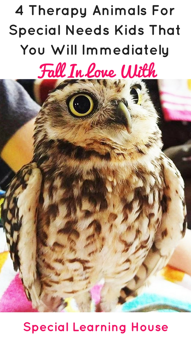 4 Therapy animals for special needs kids that you will immediately fall in love with. | speciallearninghouse.com