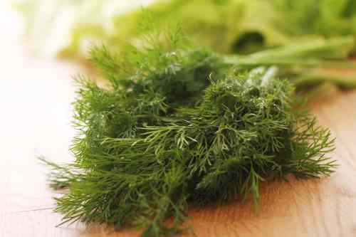 Prodigious Dill Tzatziki Sauce Dill Pickle Juice Substitute Too Much How To Fix It Too Much How To Fix It Spiceography Substitute