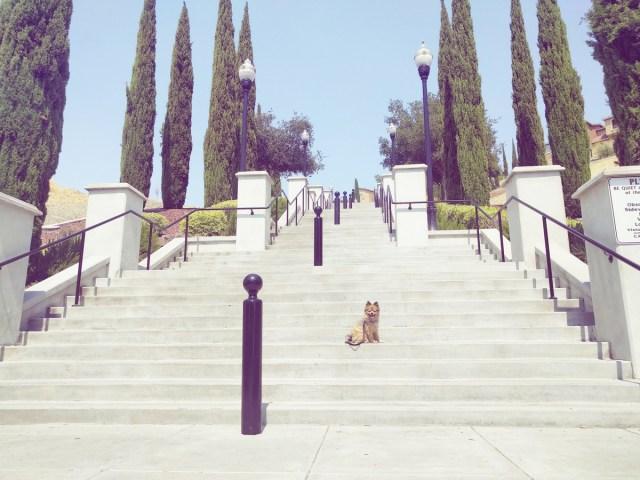 alfie-on-stairs