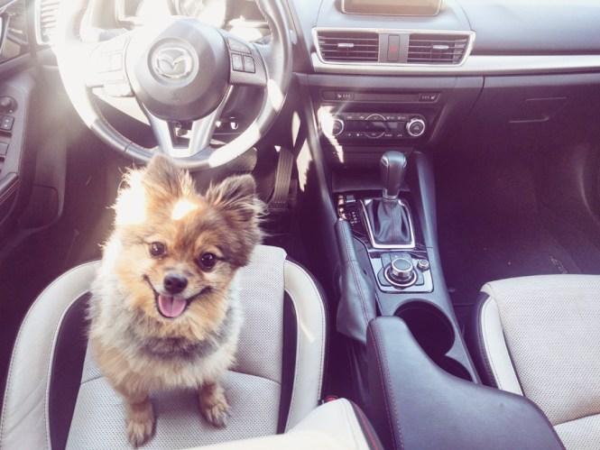 Alfie-in-drivers-seat