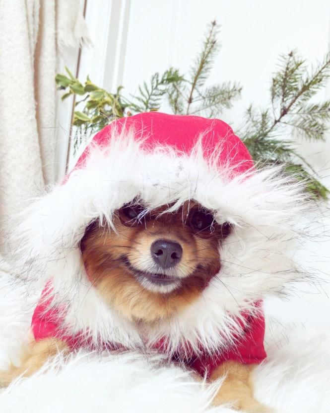 Alfie-Santa