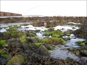 Orkney features many creatures, plants and birds due to it's position on the gulf stream
