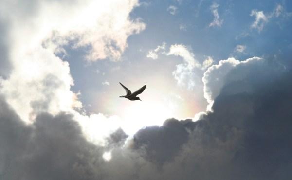 bird_on_way_to_heaven