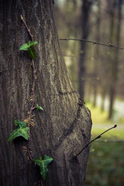 tree-933699_1920