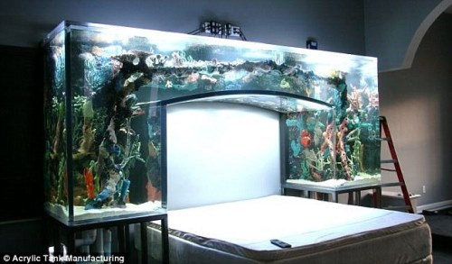 aquariums gold fish over gallons of you build your dallas