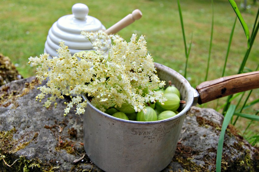 Gooseberry and elderflowers in pot