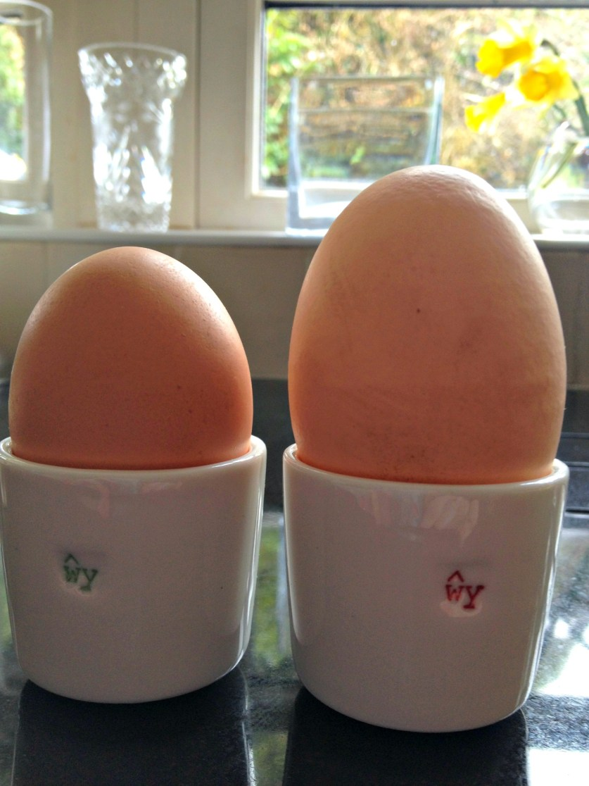 Eggs in all sizes