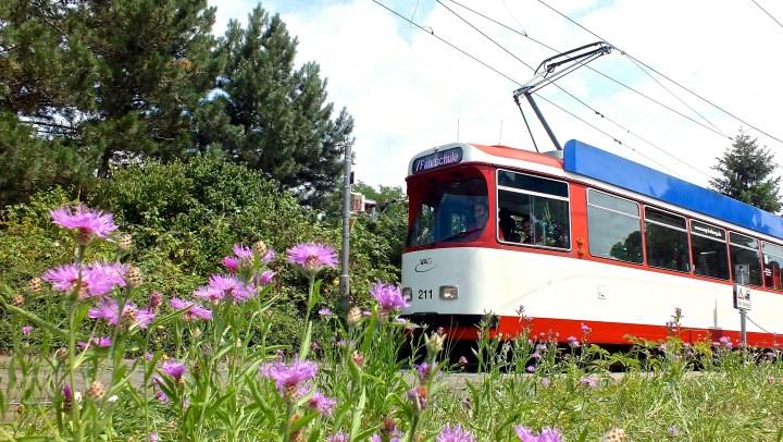 """Der Stadtbahnzug 211 fuhr am Runzmattenweg, als """"/ Fahrschule"""" ebenfalls in Richtung Bissierstraße"""