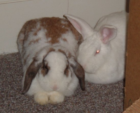 snuggling bunnies