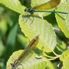 Citizen Scientists Sought for St. Croix Insect Survey