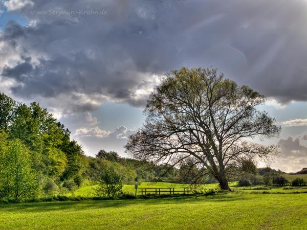 HDR - Baum auf Wiese