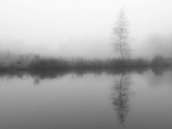 Baum reflektiert im Wasser