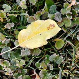 Light Autumn Frost, Kittitas County, Washington, 2013