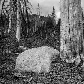 Alpine Forest, Mammoth Lakes, California, 2015