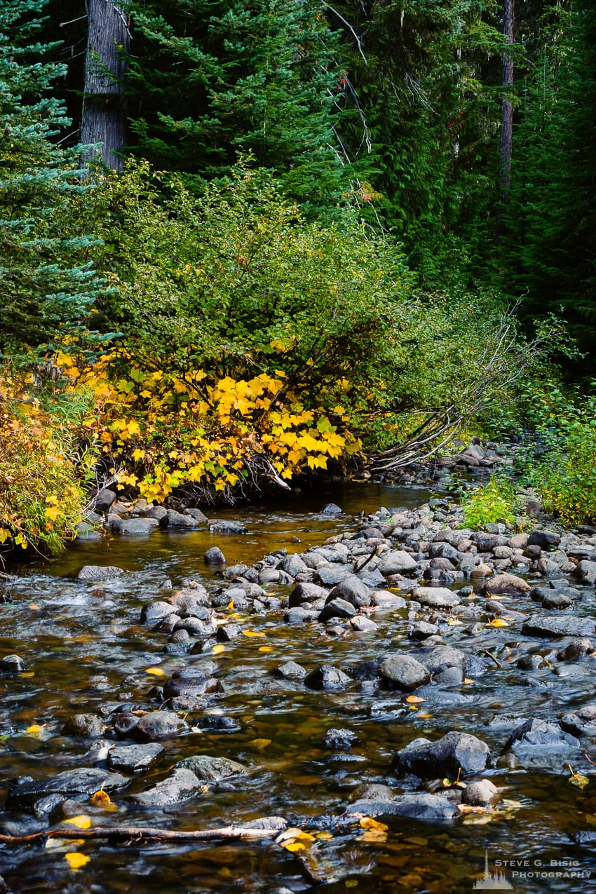 Early Autumn Colors, Upper Little Naches River, Washington, 2016