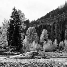 Fall Colors in Black and White, Cle Elum River, Washington, 2012