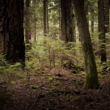 Photography Project: Lowland Winter Forest, Point Defiance Park, Tacoma, Washington, 2015