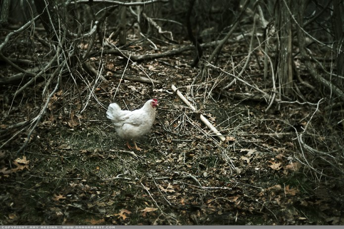 Wild Long Island Chicken