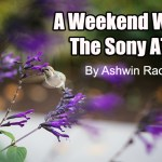 A weekend with the Sony A7R – A companion review. By Ashwin Rao