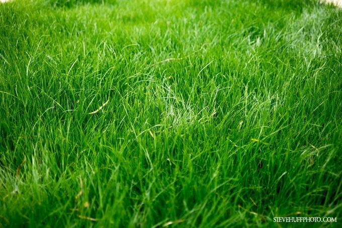 35grass