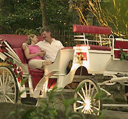 a horse-drawn carriage ride