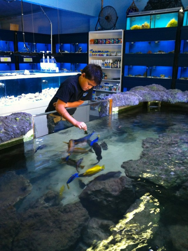 Devin Hender feeds fish in the store?s 2,500 gallon saltwater pond
