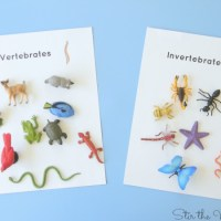 Hands-on Sorting Vertebrates and Invertebrates