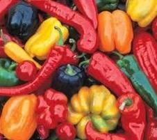 Peppers, Capsicum