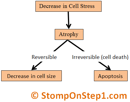 Atrophy Decreased Cell Stress