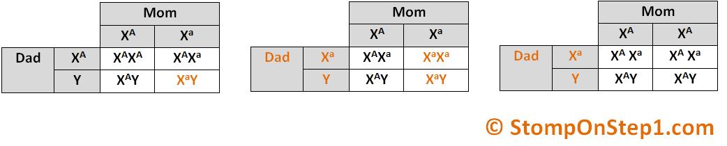 sex linked inheritance worksheet