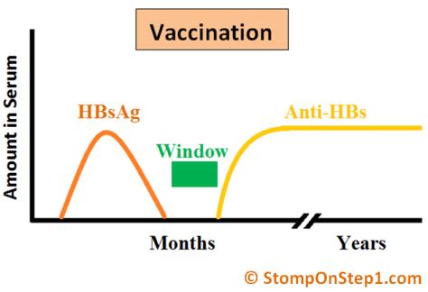 Hepatitis Serology Vaccination HBsAg Anti HBs HBsAb
