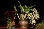 John Allen's exquisite orchids brought fragrance and natural beauty to the stage.