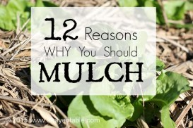 12 Reasons Why You Should Mulch