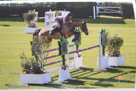 Name:Strides Foxy Lady Year of Birth: 2009 Sex:Mare Breeding: Billy Mexico x Billy Congo Jumping Level: 1.35m