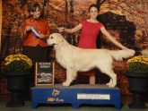 Apollo- Canadian Champion, Int Ch., 4 X AKC reserve Male
