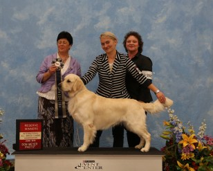 Apollo winning Reserve BOB Male