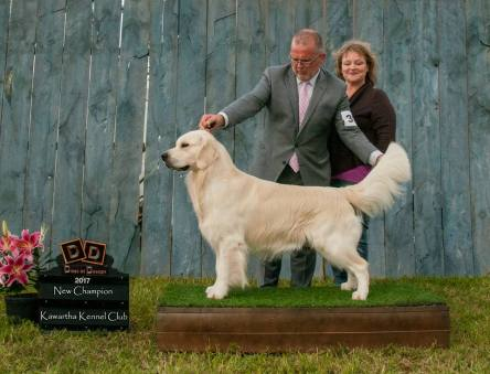 Canadian Ch, Int Ch Phoenix Ducado De Espinosa of Strike Golden- home bred and raised here